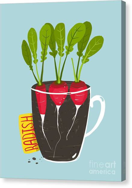 Ingredient Canvas Print - Growing Radish With Green Leafy Top In by Popmarleo
