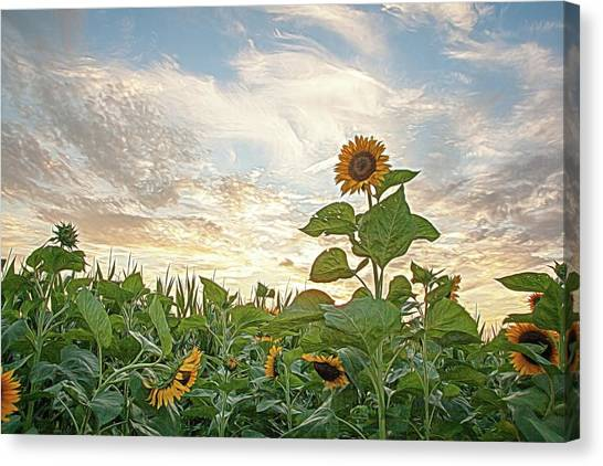 Growing Tall Canvas Print