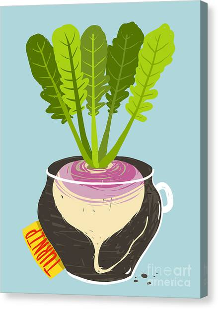 Ingredient Canvas Print - Growing Turnip With Green Leafy Top In by Popmarleo