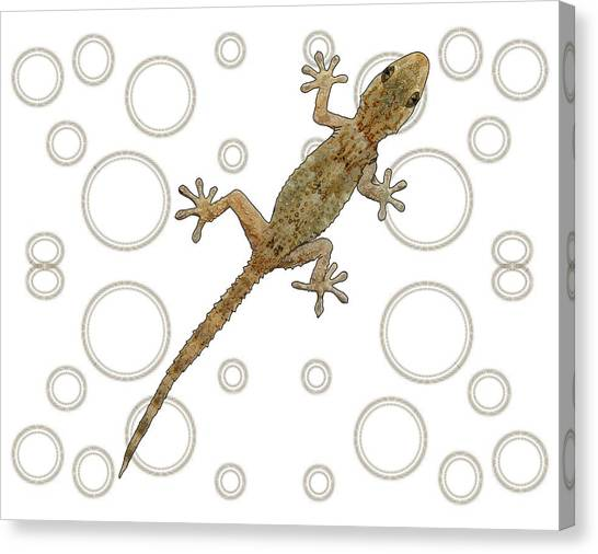 Canvas Print - H Is For House Gecko by Joan Stratton