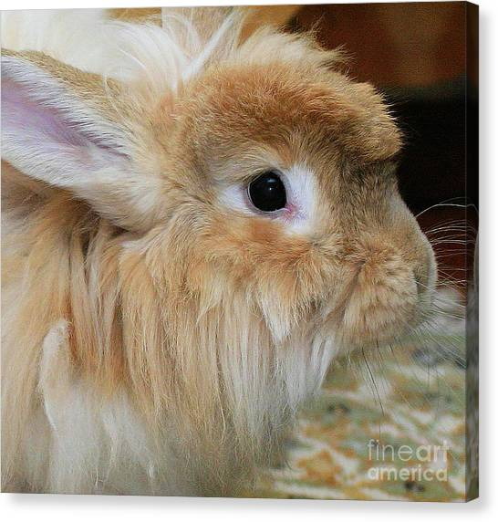 Hairy Rabbit Canvas Print