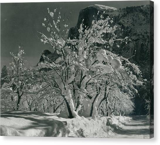 Half Dome, Apple Orchard, Yosemite Canvas Print