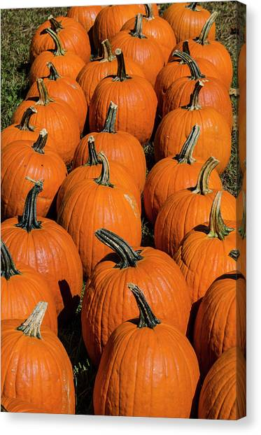 Halloween Harvest Canvas Print