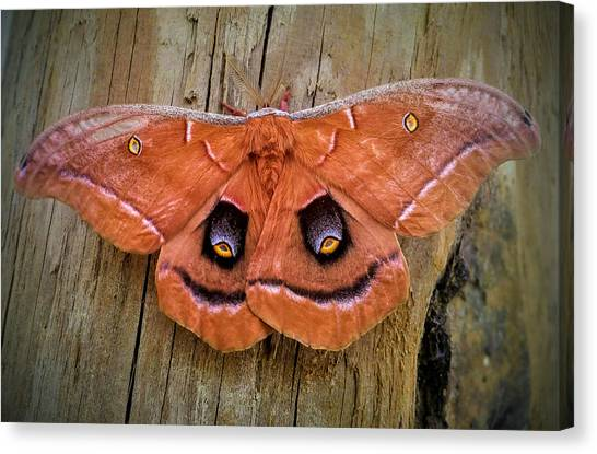 Halloween Moth Canvas Print