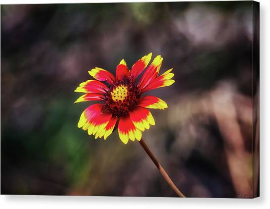 Canvas Print featuring the photograph Hand Painted by Rick Furmanek