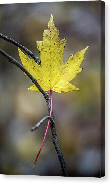 Canvas Print featuring the photograph Hanging Out by Michael Arend