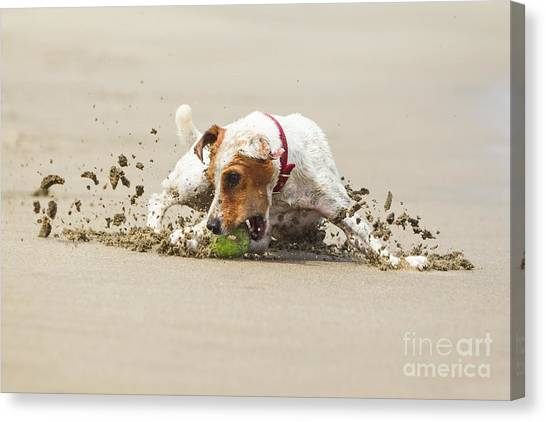 Happy Dog Stopping On The Ball High Canvas Print by Ammit Jack