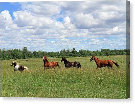Happy Horses Canvas Print by Corrie White Photography