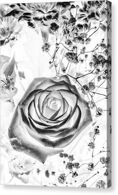 Botanical Garden Canvas Print - Harmonics Inverted by Jorgo Photography - Wall Art Gallery