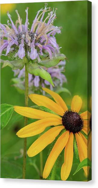 Canvas Print featuring the photograph Harmony In Nature by Dale Kincaid