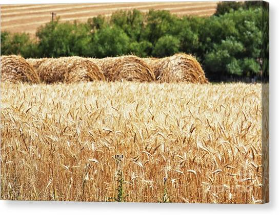 Canvas Print featuring the photograph Harvest Time In Idaho by Tatiana Travelways