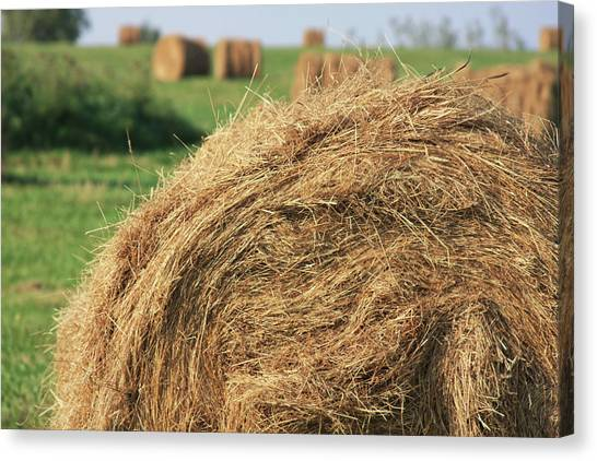 Canvas Print featuring the photograph Hay Bail Closeup by Tatiana Travelways