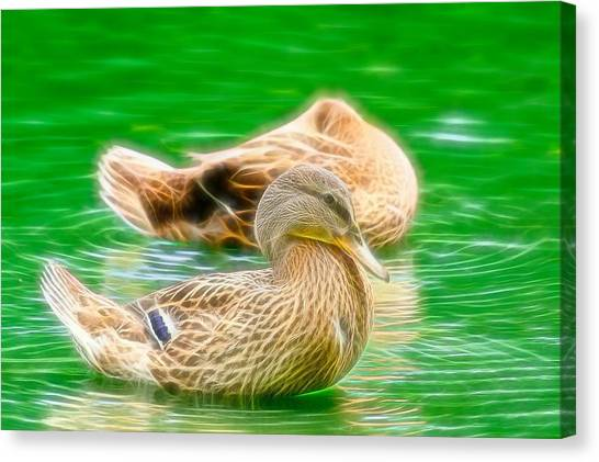 Headless Honey Duck Fibers Canvas Print