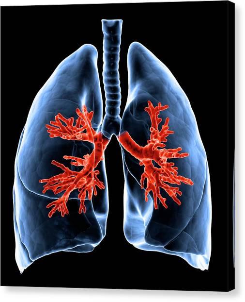 Healthy Lungs, Artwork Canvas Print by Science Photo Library - Andrzej Wojcicki