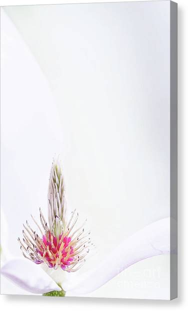The Heart Of A Magnolia Canvas Print