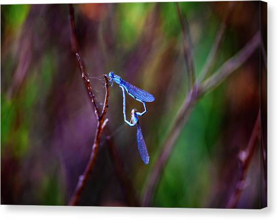 Heart Of Dragonfly Canvas Print