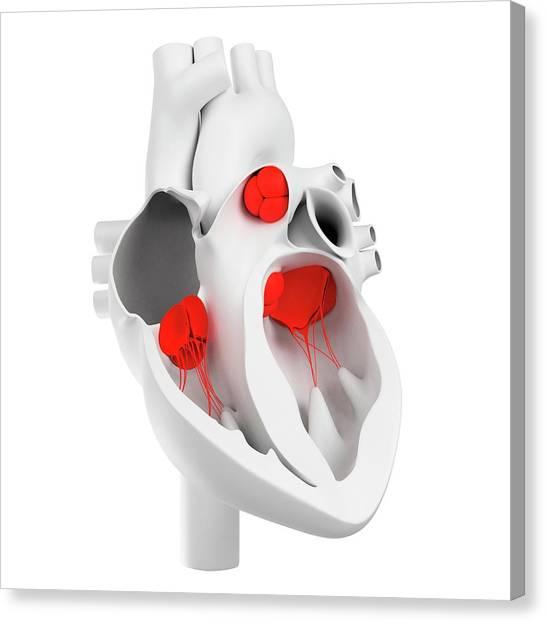Heart Valves, Artwork Canvas Print by Sciepro