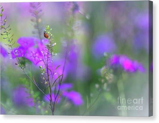Heartsong In The Meadow Canvas Print