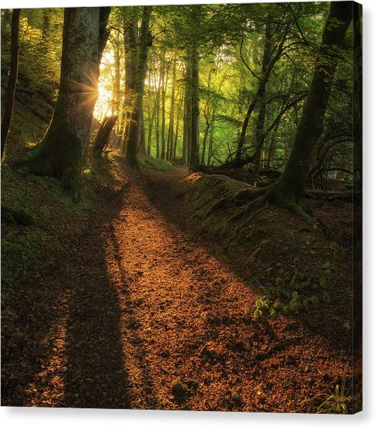 Canvas Print featuring the photograph Henllan Woods Sunrise by Elliott Coleman