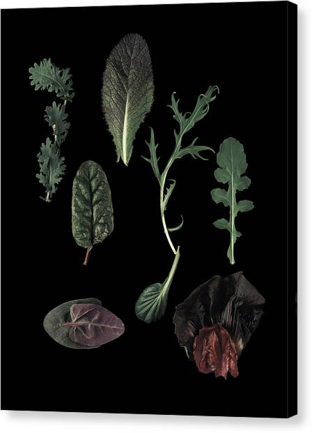 Herbs Leaves On Black Canvas Print by Davies And Starr