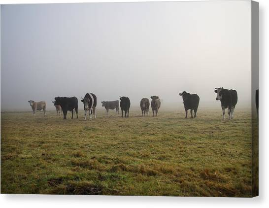 Nottinghamshire Canvas Print - Herd Of Cows In Foggy Field by Martb