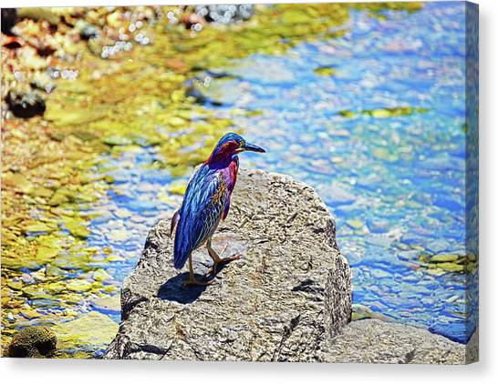 Heron Bluff Canvas Print