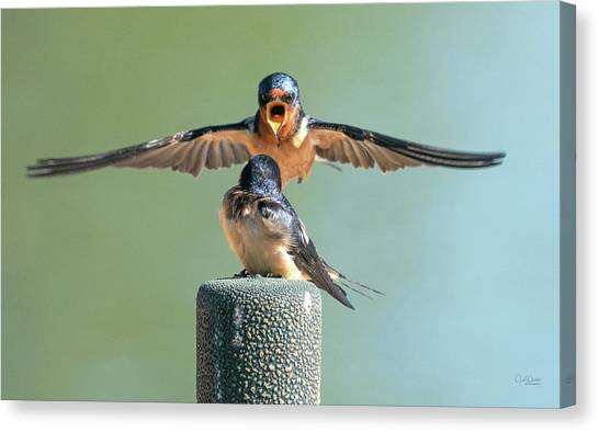 Hey, Babe, Let's Rock N Roll.  Barn Swallows Canvas Print