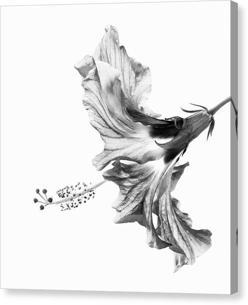 Hibiscus Canvas Print - Hibiscus In Black And White by Christopher Johnson
