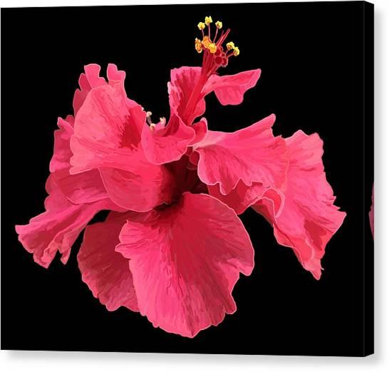 Hibiscus Pink In Black Canvas Print