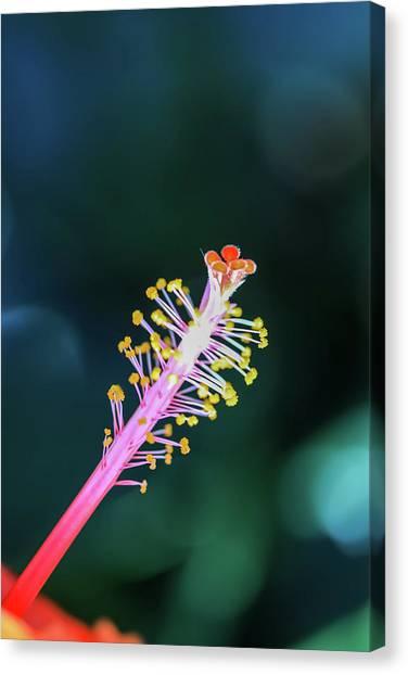 Hibiscus' Pistil Canvas Print