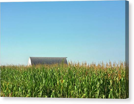 Corn Field Canvas Print - Hidden From View by Todd Klassy