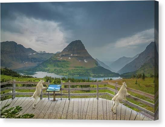 Canvas Print featuring the photograph Hidden Lake Overlook // Glacier National Park by Nicholas Parker