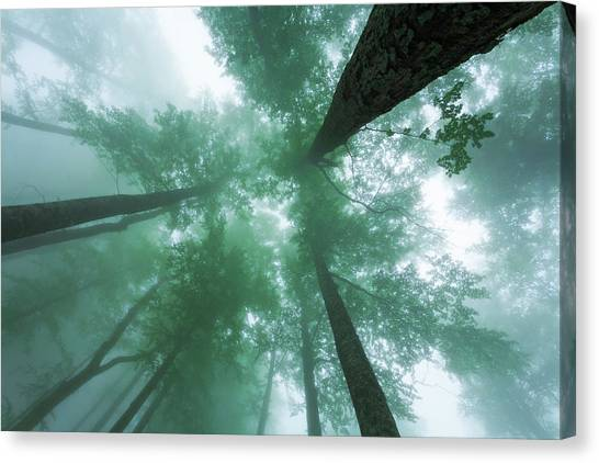 High In The Mist Canvas Print