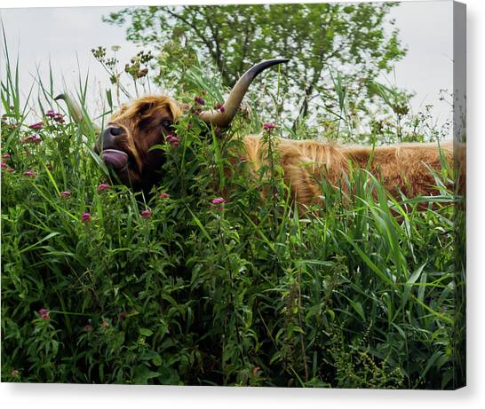 Canvas Print featuring the photograph Highland Cow In Tall Grass by Scott Lyons