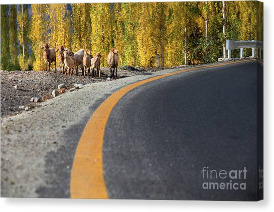 Highway Story Canvas Print