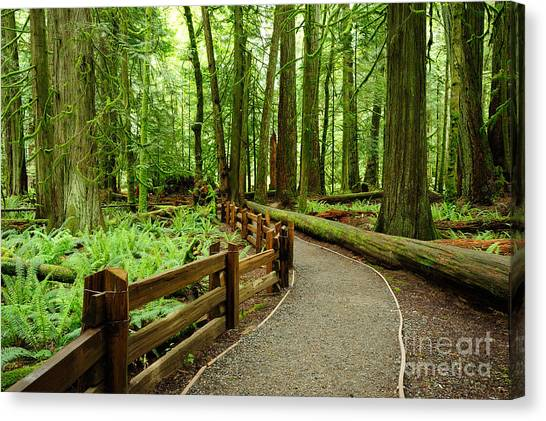Vancouver Canvas Print - Hiking In Rain Forest In Macmillan by 2009fotofriends
