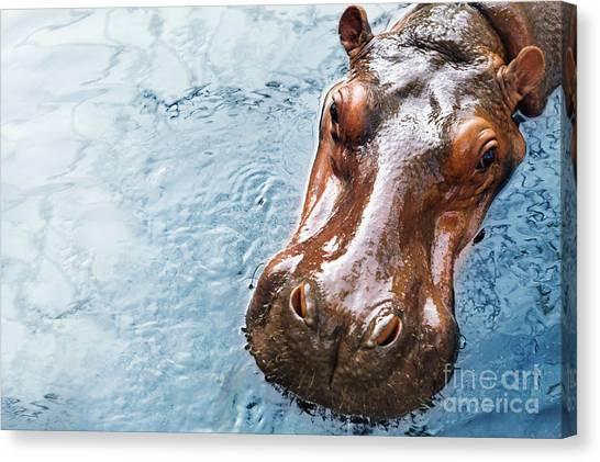 Zoology Canvas Print - Hippopotamus by Redchanka
