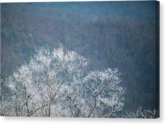 Hoarfrost Collects On Branches Canvas Print