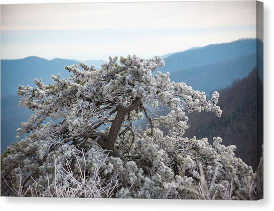 Hoarfrost In The Blue Ridge Mountains Canvas Print