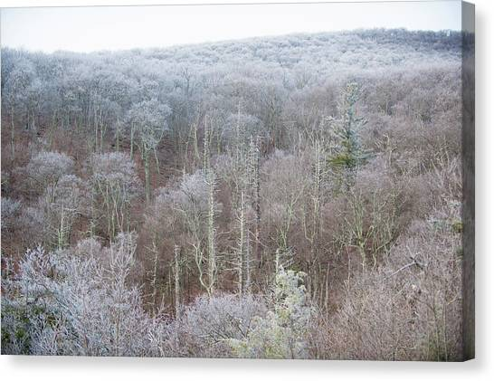 Hoarfrost In The Tree Tops Canvas Print