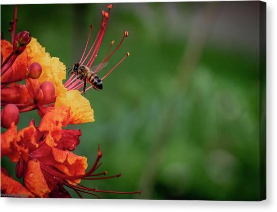 Honey Bee Extraction Canvas Print