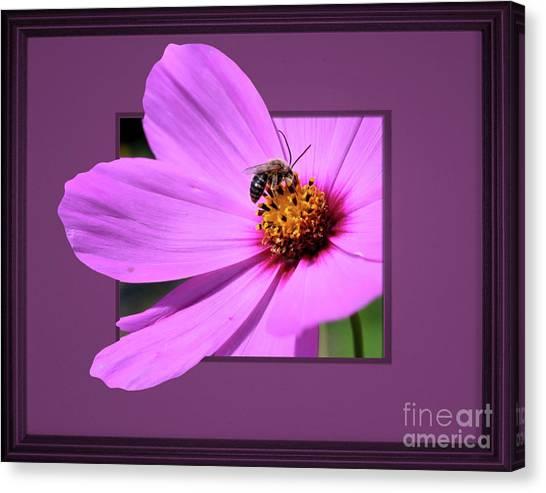 Honey Bee On Pink Canvas Print