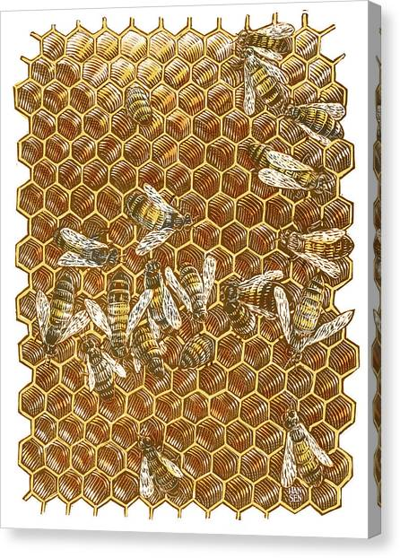 Canvas Print featuring the drawing Honey Bees by Clint Hansen