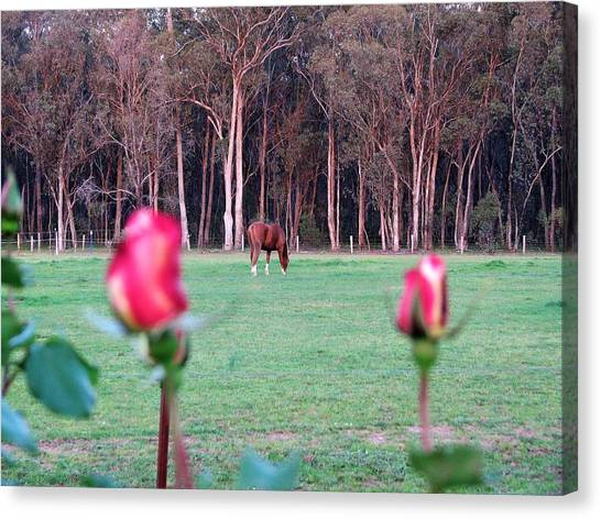 Horse And Roses Canvas Print