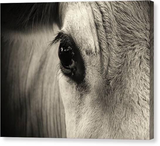 Horse Eye Canvas Print