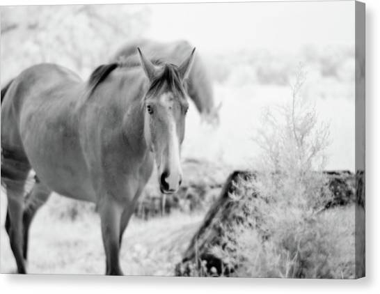 Horse In Infrared Canvas Print