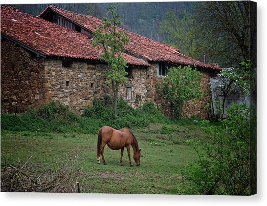 Horse In The Field Next To A Rural House Canvas Print