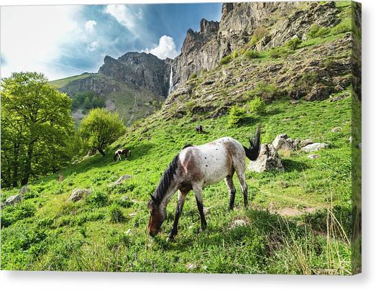 Canvas Print featuring the photograph Horse On Balkan Mountain by Milan Ljubisavljevic