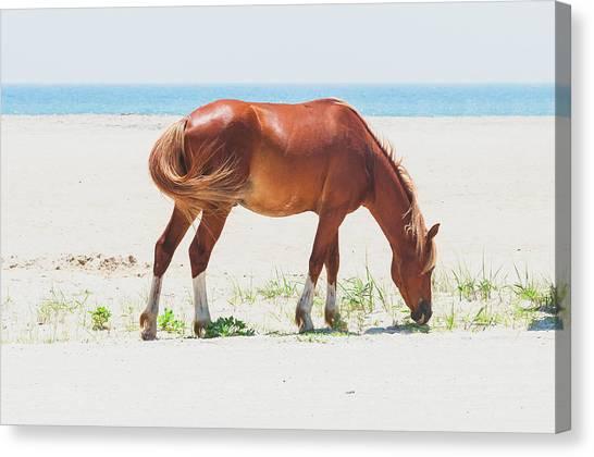 Horse On Beach Canvas Print