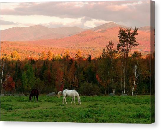 Horses Grazing During The New England Canvas Print by Myloupe/uig